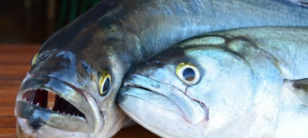 Cucinare il pesce serra con il sale grosso di cervia - Come cucinare il pesce serra ...