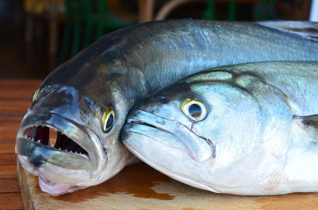 Cucinare il pesce serra con il sale grosso di cervia - Bagno con sale grosso ...